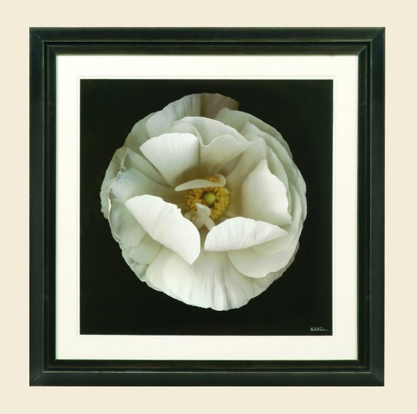 White Black Square Folded Ranunculus Wall Art BMC-9800-646BEC