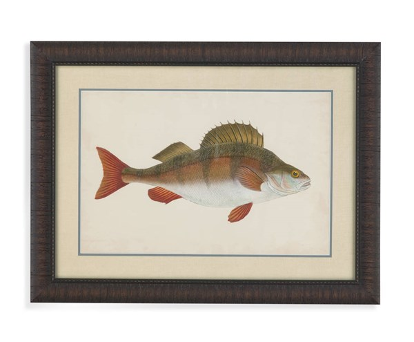 Vintage Donovan Antique Fish I (L 24 X H 32) BMC-9900-482AEC