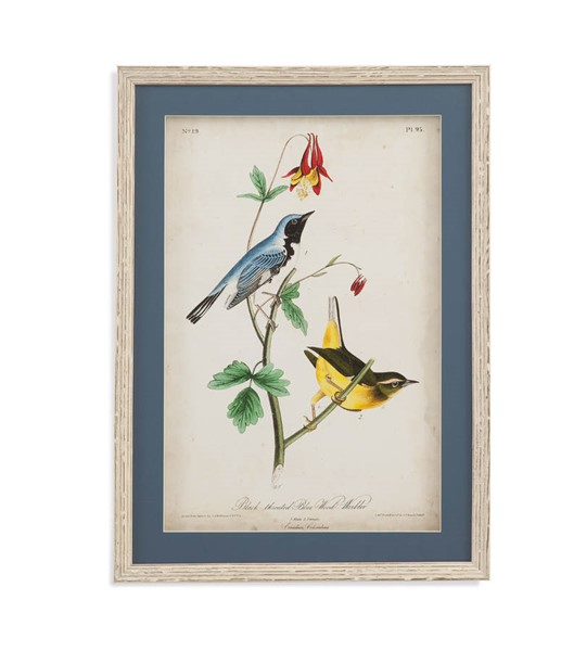Bassett Mirror Blue Black Throated Warbler Wall Art BMC-9900-805AEC