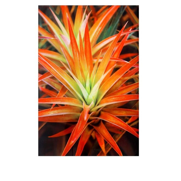 Crestview Collection Hot Blooms Tempered Glass Wall Decor CRST-CVTOP2391