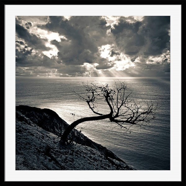 Surya Eternal Paper Dead Tree at Sunset Wall Art - 28x28 OB132A001-2828