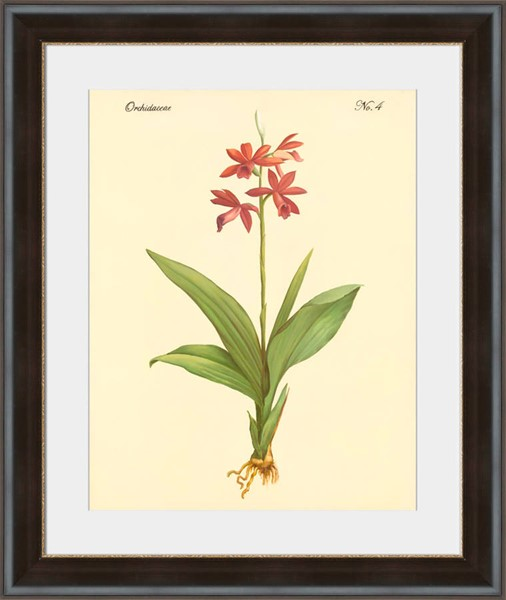 Surya Eternal Paper Orchidaceae Wall Art - 17x18 PE113A001-1718